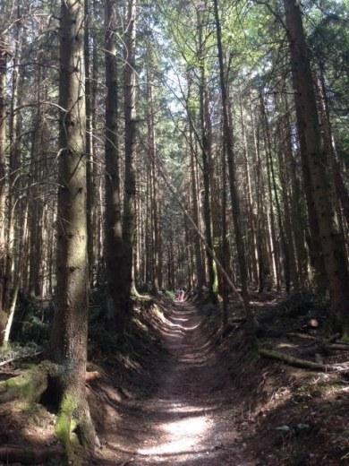 Waldweg.jpg